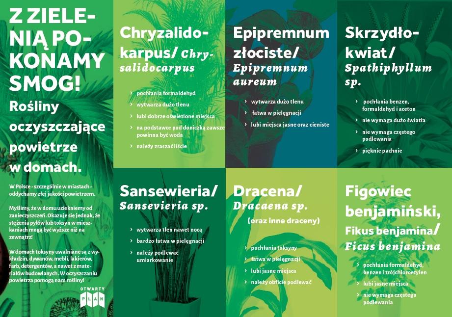 rosliny-oczyszczajace-powietrze-cz.1